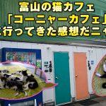 富山の猫カフェ「コーニャーカフェ」に行って癒やされてきた感想