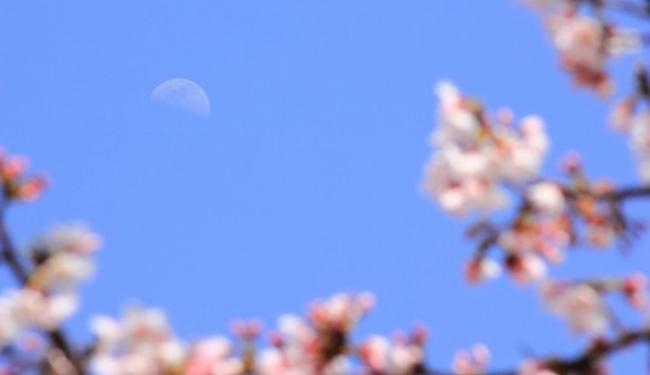 luna sea luv